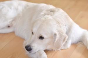 Behandlung von Hunden