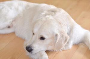 Ernährungsberatung für Hunde