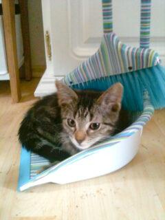 Gesunder Start für Hund und Katze