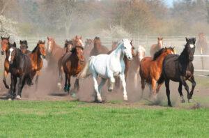 Ernährungsberatung für Pferde