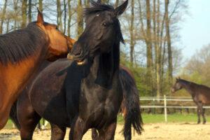 Ganzheitliche Behandlung von Pferden