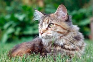 Behandlung von Katzen